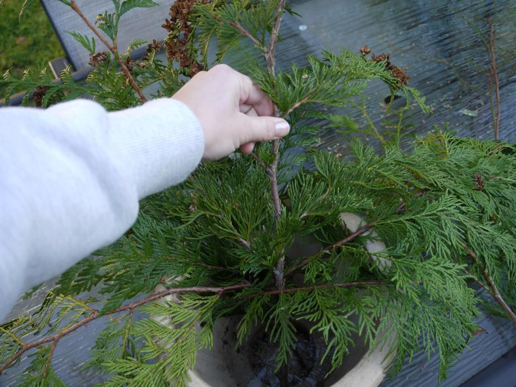 cedar branches planter box
